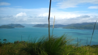 Grasstrees vor den Whitsunday Islands